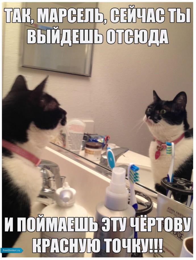 Самомотивация котЭ